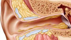 ear canal detail